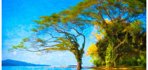 Graceful Trees flowing into the blue waters of Lake Nicargua - Textured Photo Art