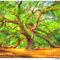Angel Oak Wall Art - South Carolina Print by Mark Tisdale