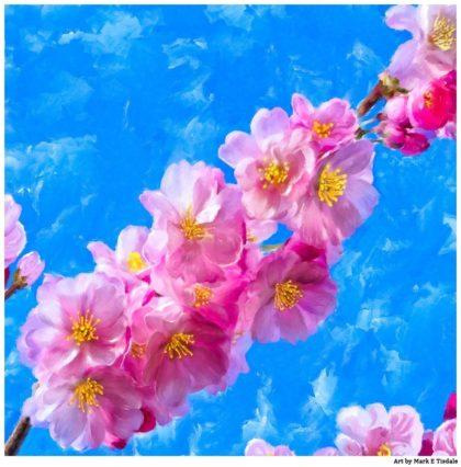 Cherry Blossom Artwork - Japanese Cherry Blossom Prints For Sale by artist Mark Tisdale