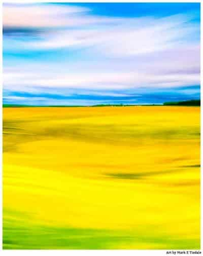 Art Print Of Golden Fields of Rapeseed In The English Countryside